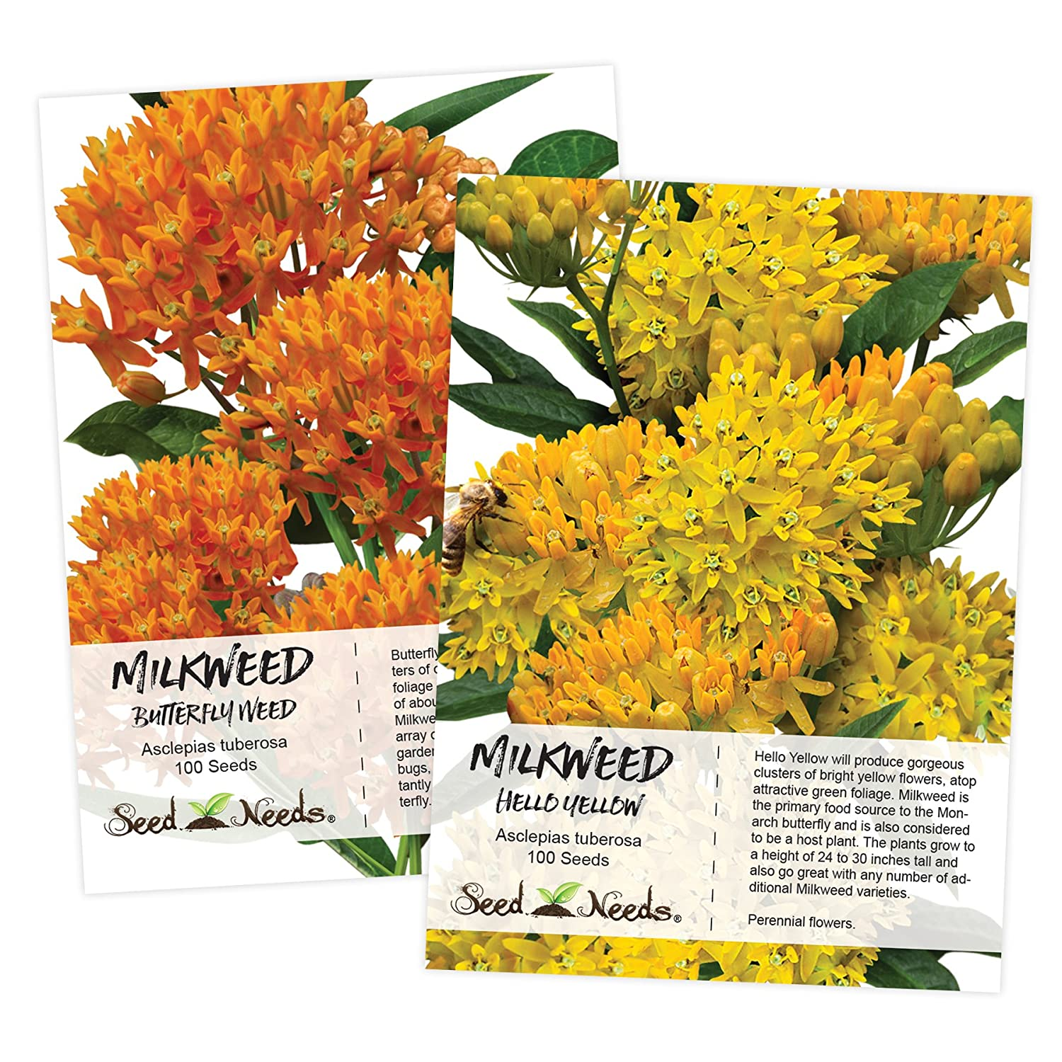 Asclepias tuberosa BUTTERFLY WEED 50 seeds