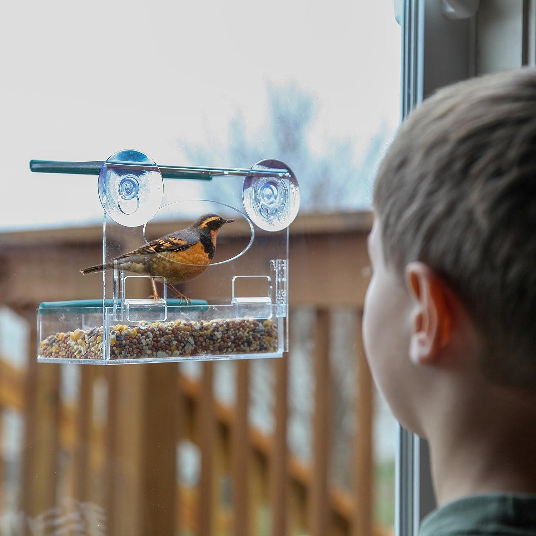 Window bird house - Amazon Com Best Window Bird Feeder Bird Feeder With Strong Suction Cups Removable Tray Fun Gift Bird Houses Patio Lawn Garden