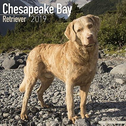 Amazon Com Chesapeake Bay Ret Calendar 2019 Dog Breed Calendar