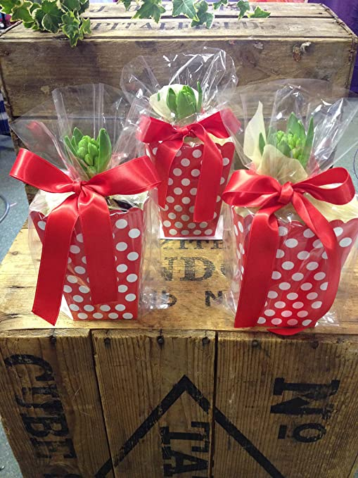 16 Polka Dot Boxes 16 Clear Cellophane Bags And Red Double Sided Satin Ribbon Christmas Small Gifts Party Bags Plants