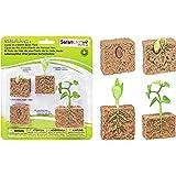 Safari Ltd. Cycle de vie d'un plant de haricot 662416
