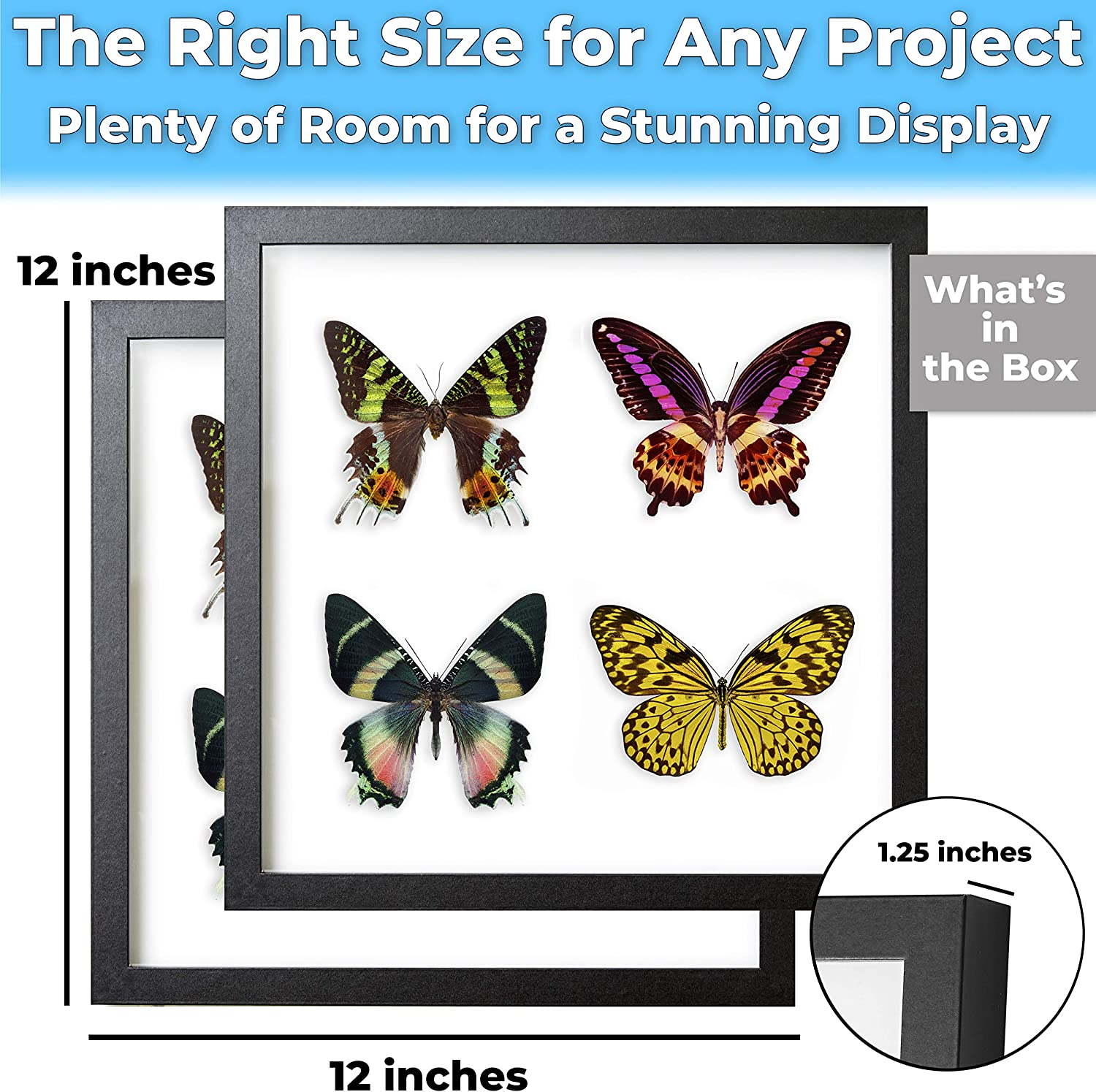 Wedding Bouquets Super-Sturdy Awards Medals Tickets Best Shadowbox to Showcase Photos Real Wood 12x12 Shadow Box Frame 2pk CDs Seashells and Insects Hardwood Display with Real Glass