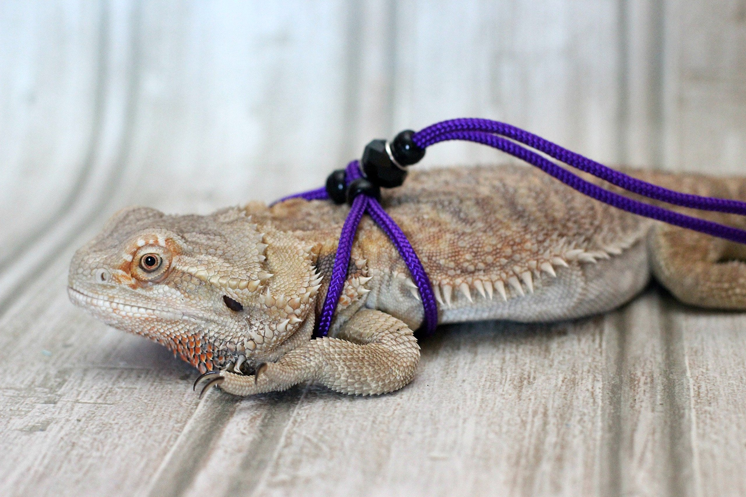 Adjustable Reptile Leash™ Harness Great for Reptiles or Small Pets 100% Adjustable One Size Fits Most (6 Feet, Purple)