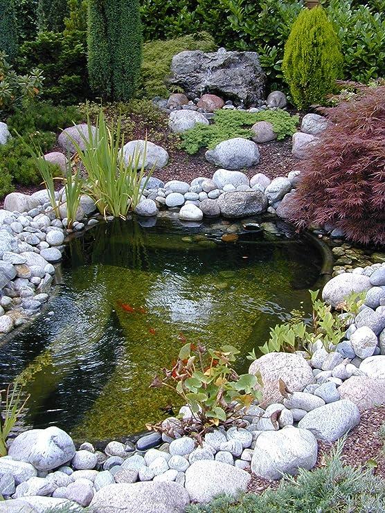 Apollo Calmus SI Bassin de Jardin