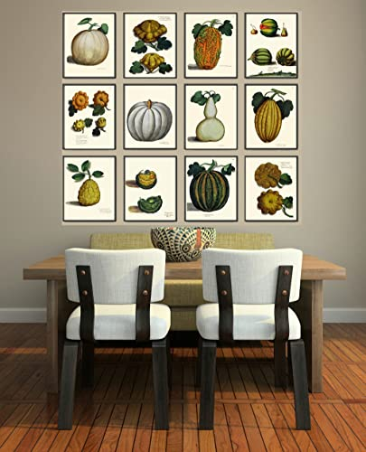 Botanical Set of 12 Prints Antique Beautiful Pumpkin Gourd Squash Green White Orange Fall