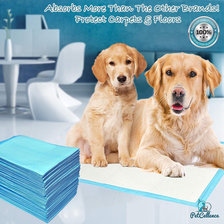 100 Empapadores Perros Cachorros Mascotas | 6 Capas Super Absorbentes Protegen Pisos Y Alfombras | Atrayente Fuerte Absorbe 200% Más Líquido ...