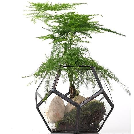 Mini Vaso Trasparente A Forma Di Dodecaedro In Vetro Piccolo Vaso