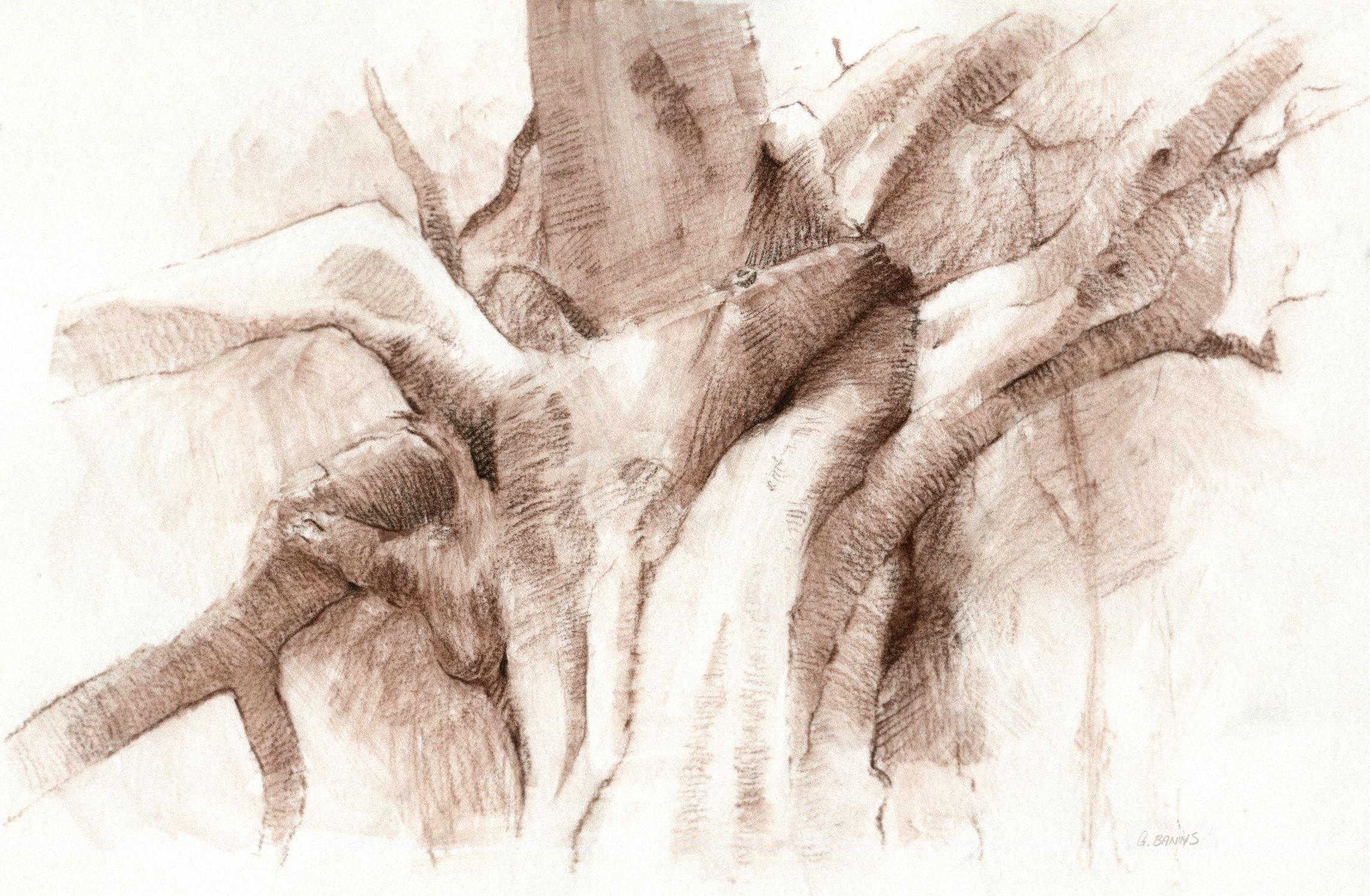 The Old Oak Tree by