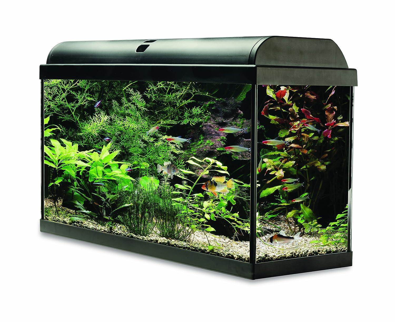 Fish aquarium price in india - Interpet Aquaverse Glass Aquarium Fish Tank Premium Kit 65 L Amazon Co Uk Pet Supplies
