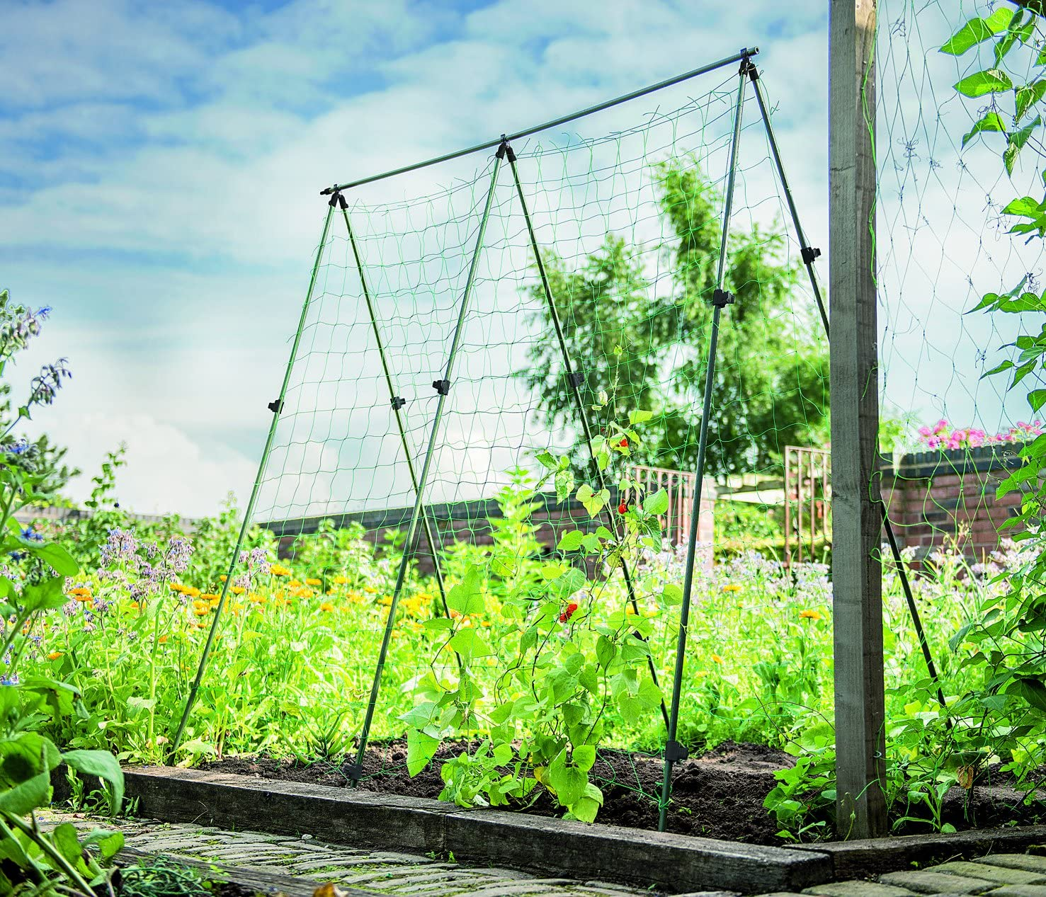 Gardman - Soporte para Cultivo de Haba: Amazon.es: Jardín