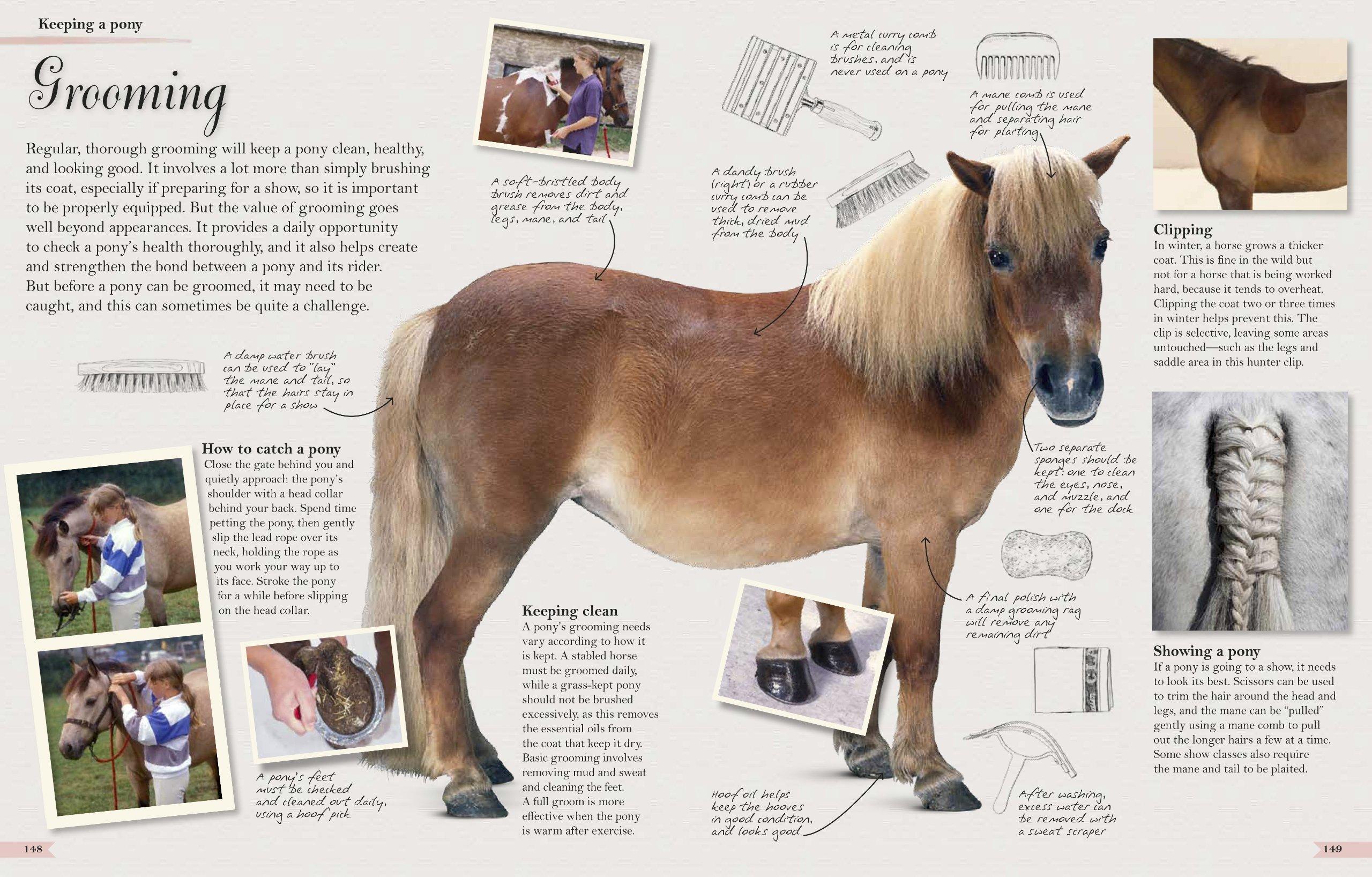 Horses: The Ultimate Treasury: John Woodward: 9780756698010: Amazon.com:  Books