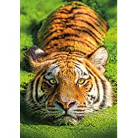 Buffalo Games Earthpix Collection Tiger Eyes Jigsaw Puzzle, Multicolor