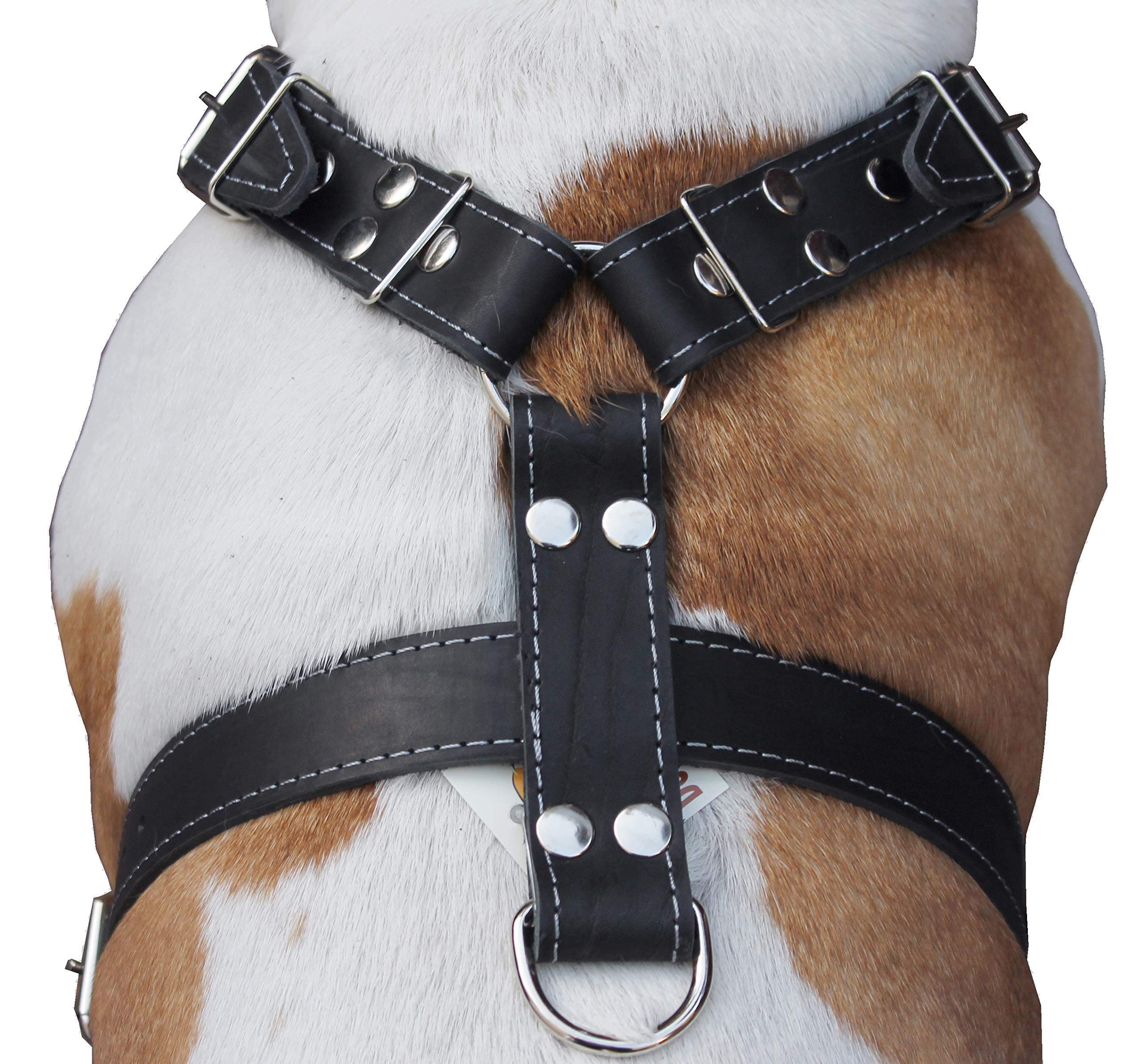 Black Genuine Leather Dog Harness, Large to XLarge. 33''-37'' Chest, 1.5'' Wide Straps, Rottweiler Bulldog