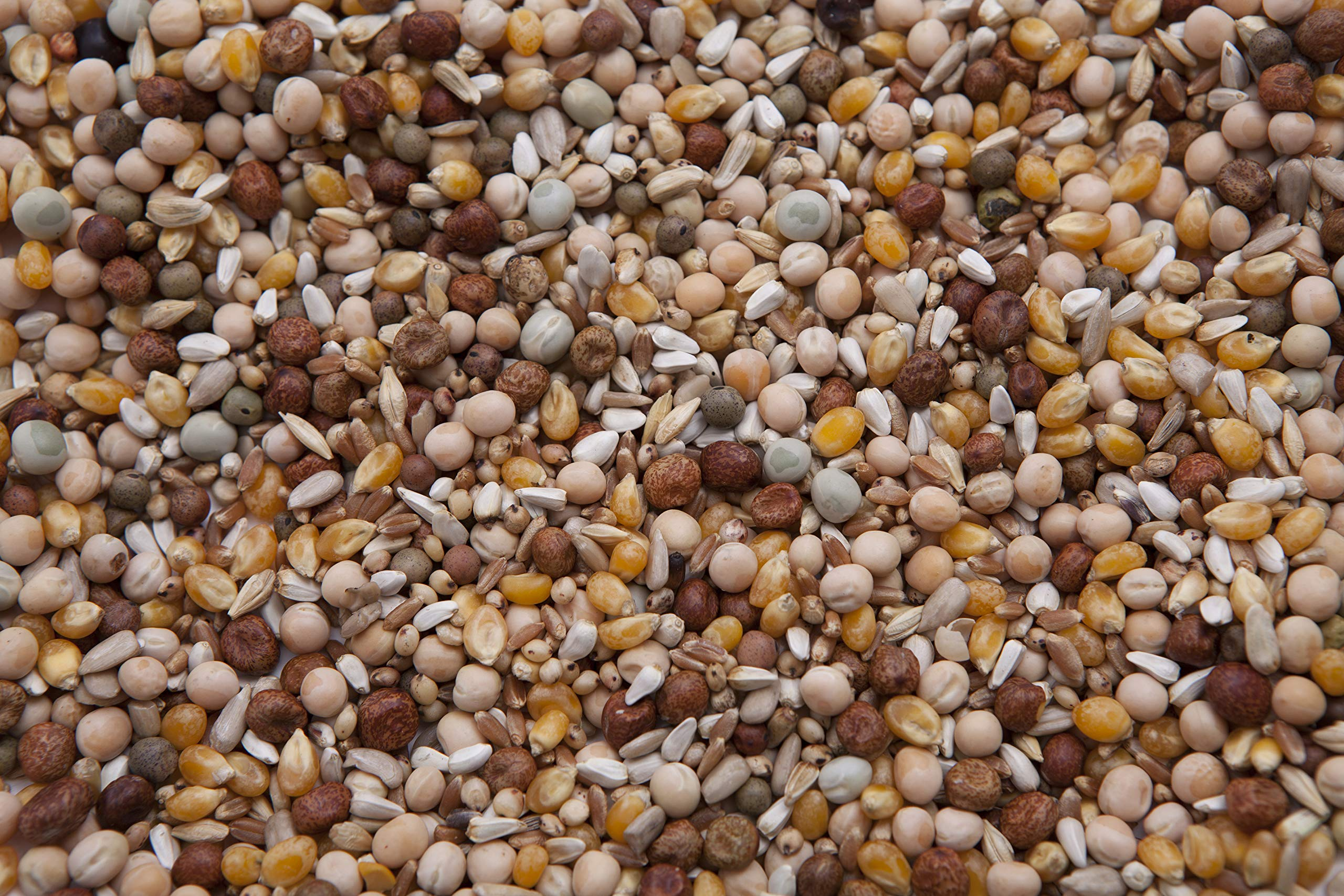 King 45 Pigeon Mix (17%) 20 lbs by Des Moines Pigeon Feed