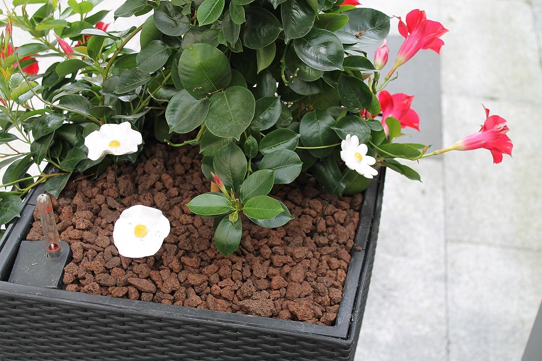 natürliche und dekorative Abdeckung für Gartenflächen Lavamulch rot//braun