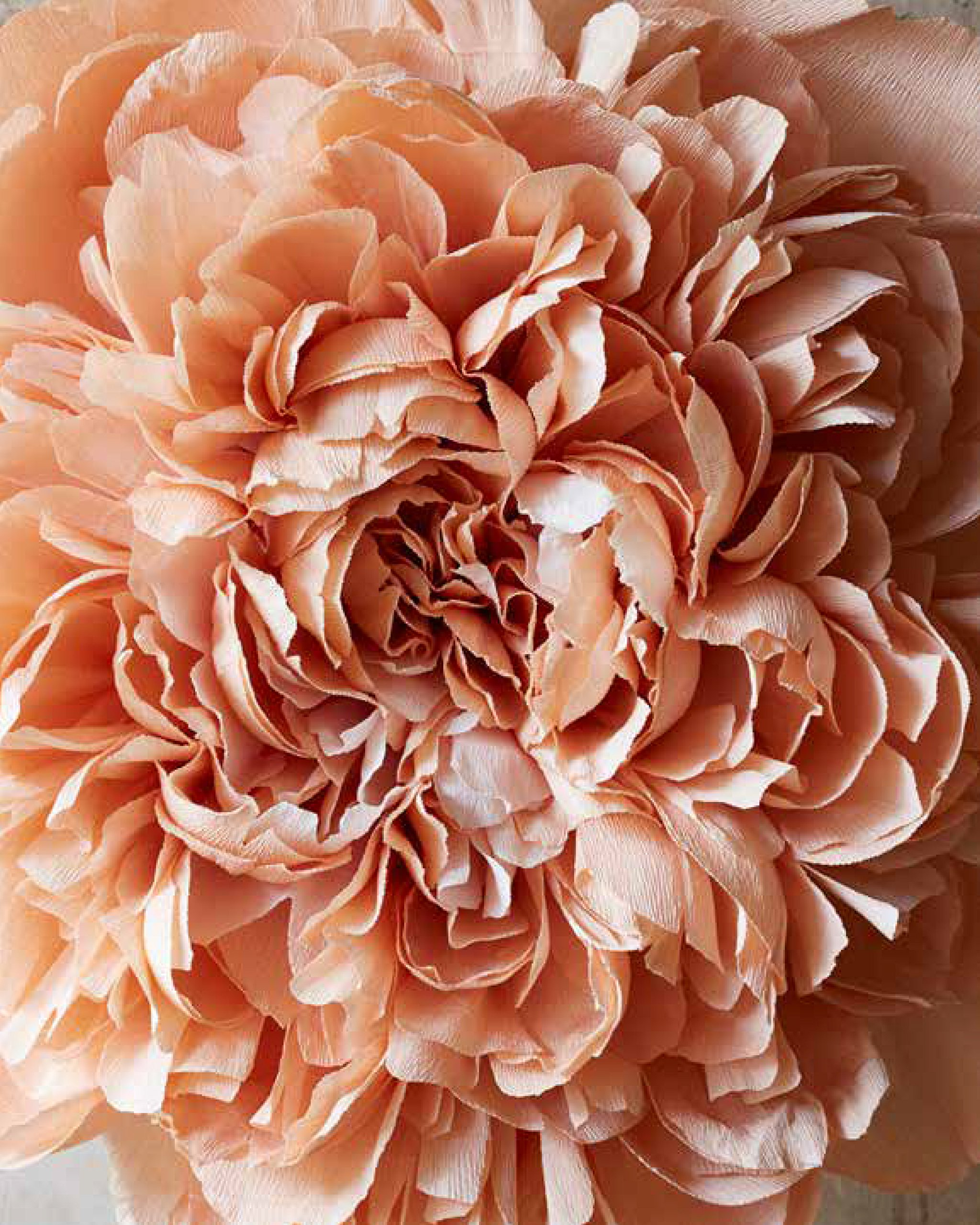 The fine art of paper flowers a guide to making beautiful and the fine art of paper flowers a guide to making beautiful and lifelike botanicals tiffanie turner aya brackett 9780399578373 amazon books izmirmasajfo