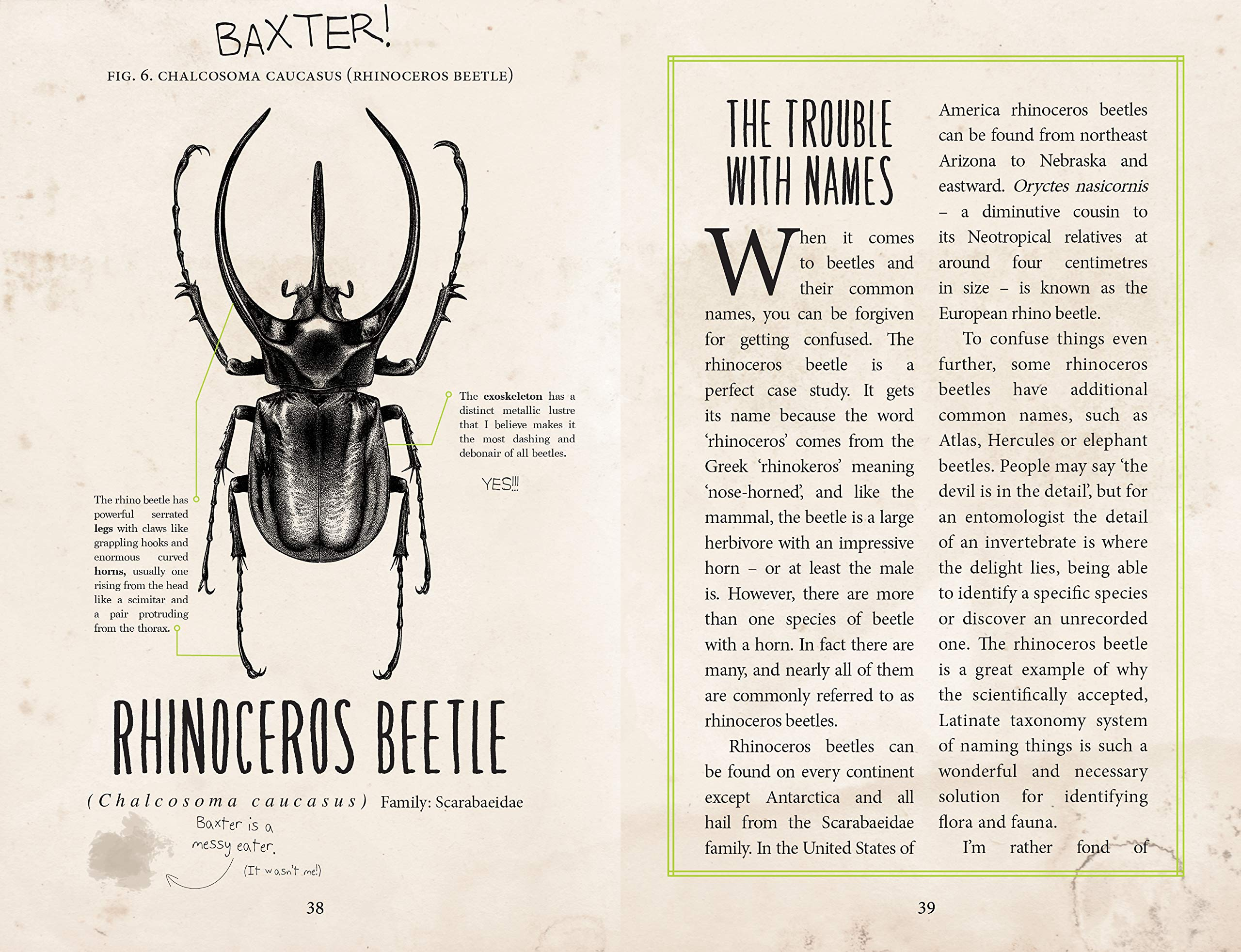 Image result for the beetle collectors handbook