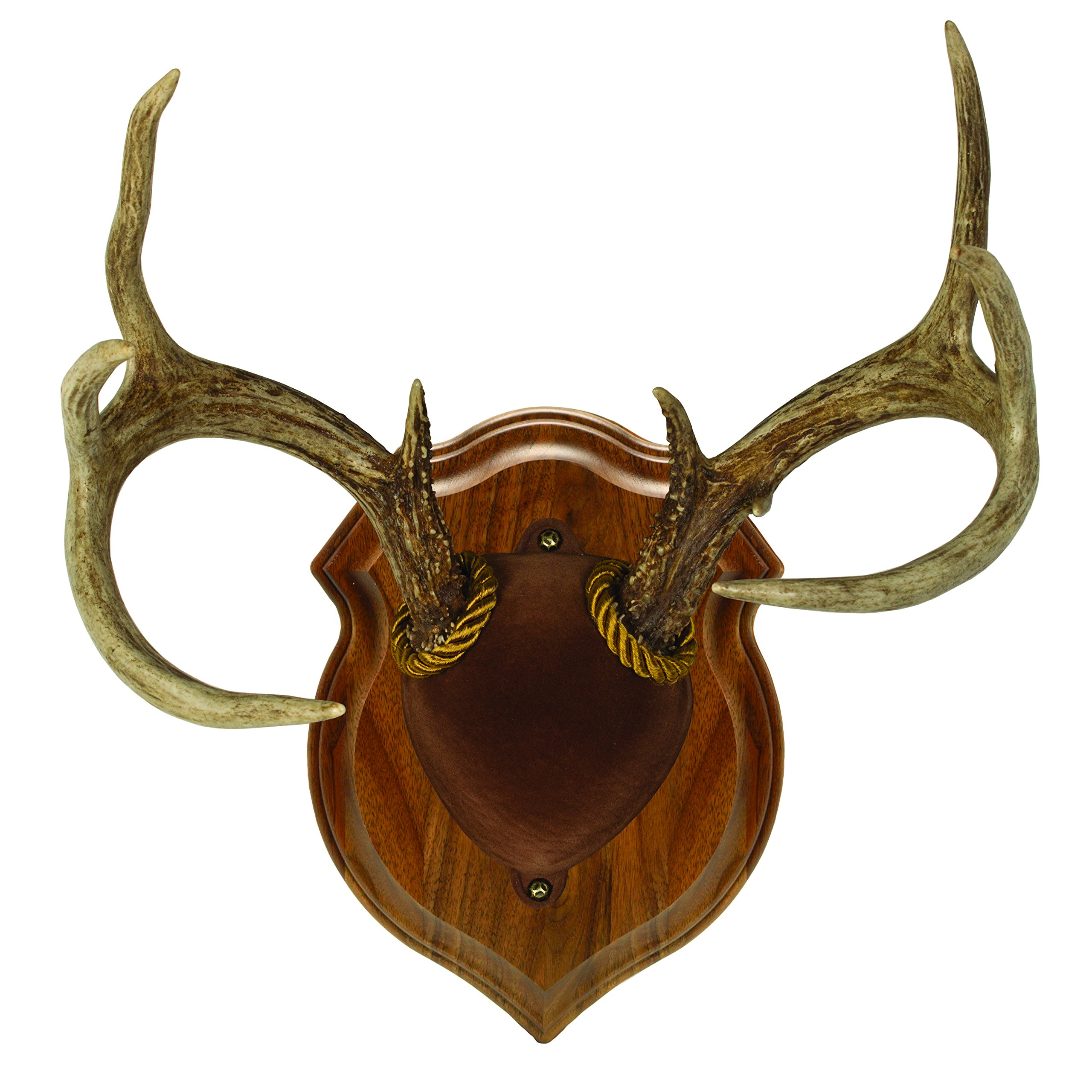 Walnut Hollow Country Deluxe Antler Display Mounting Kit in Solid Walnut for Mule Deer & Whitetail Deer by Walnut Hollow Country