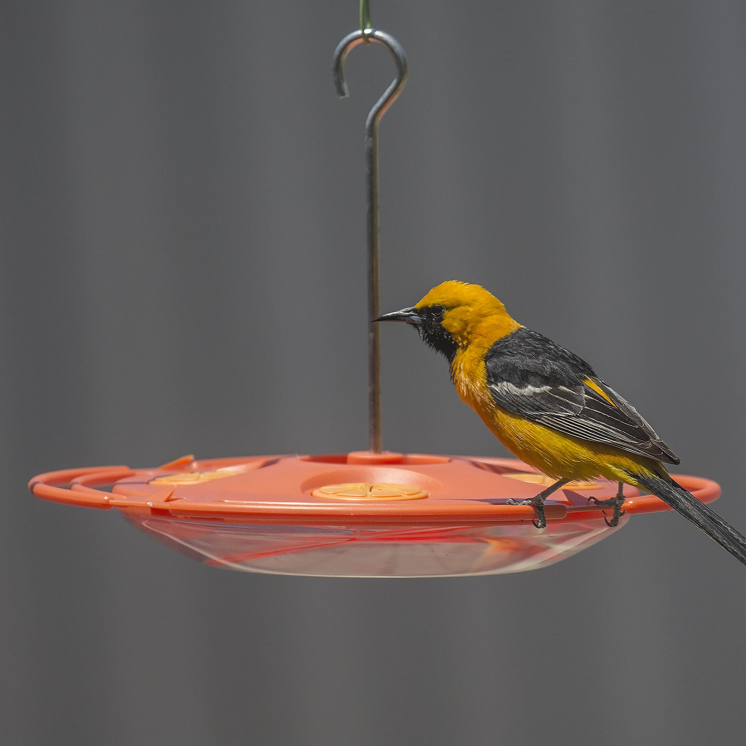 Perky-Pet  Plastic 16-Ounce Oriole Feeder- 467-3 by Perky-Pet