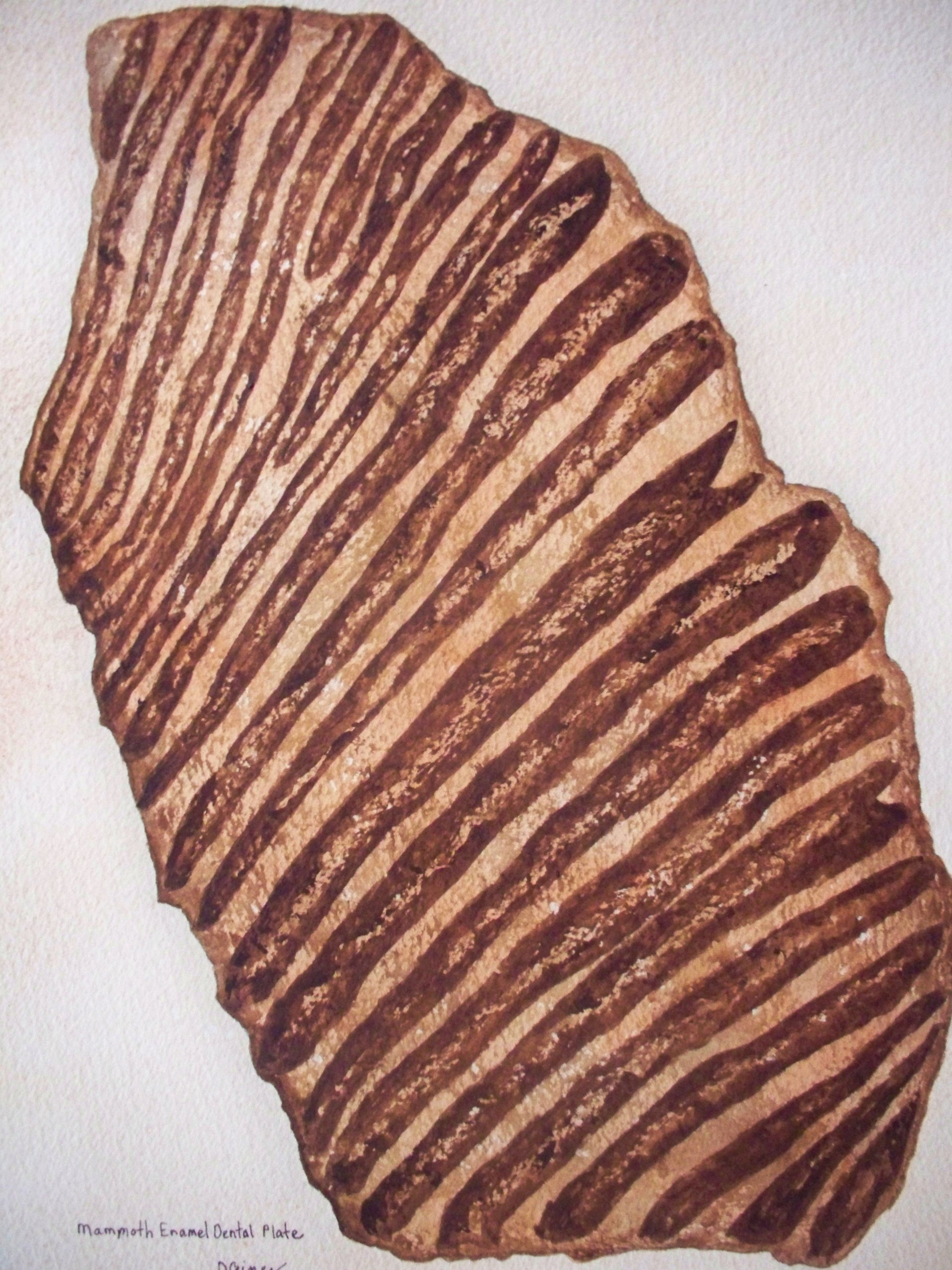 Mammoth Enamel Dental Plate by