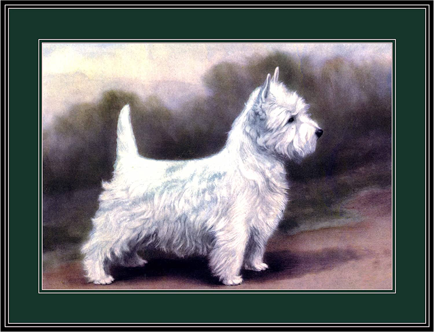 Vintage English Print Cairn Terrier Dog Puppy Dogs Puppies Art Picture Poster