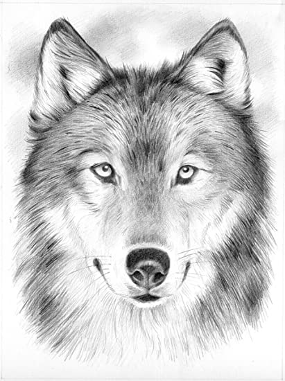 amazon com reeves wolf sketching by numbers medium arts crafts