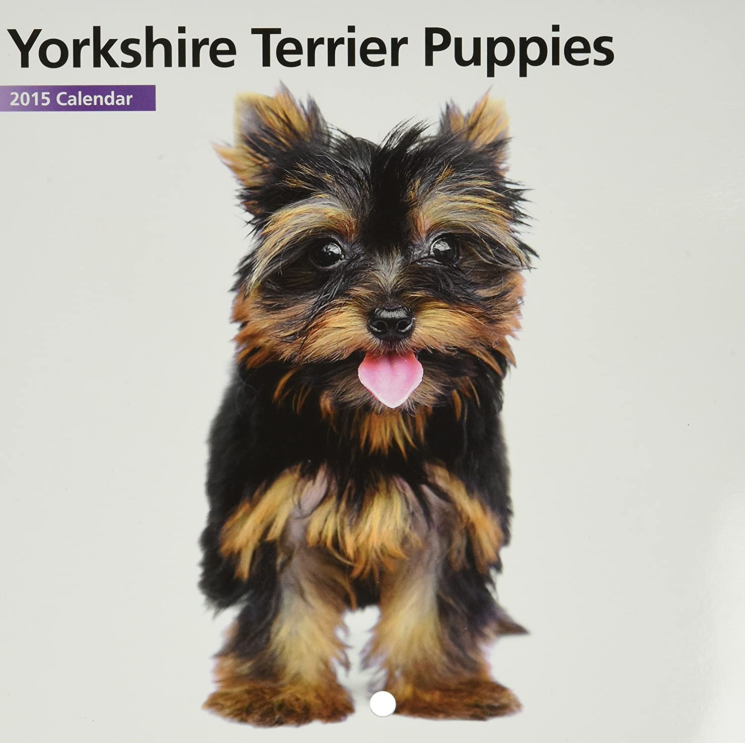 Amazoncom Magnet Steel Yorkshire Terrier Puppies Mini 2015 Wall