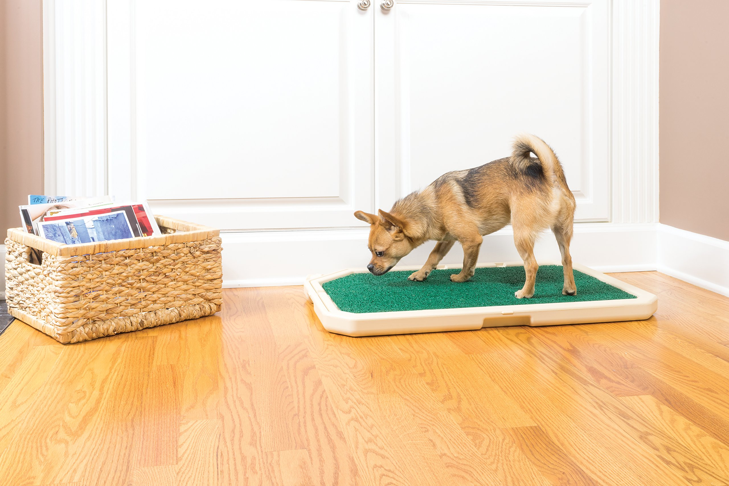 PetSafe Piddle Place Indoor/Outdoor Dog Potty, Alternative to Puppy Pads, Indoor Restroom for Dogs by PetSafe (Image #3)