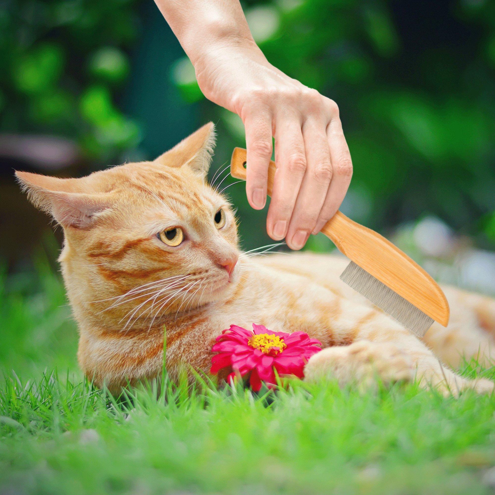 Vet's Best Bamboo Flea Comb for Cats by Vet's Best (Image #3)