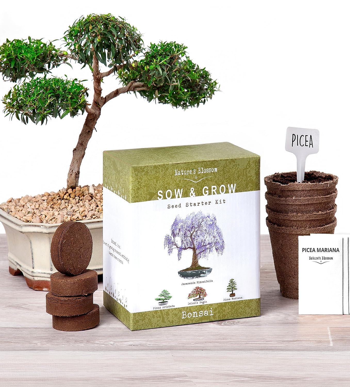 Amazon.com: Nature\'s Blossom Bonsai Garden Seed Starter Kit - Easily ...