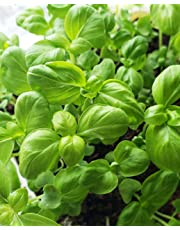 4-Herb Seed Multi-Pak * Thousands of Organic, Non-GMO Seeds * Grow Indoors or Outdoors Year-Round * 4 Most Popular and Easy-to-Grow Herbs * Fresh Herbs Daily in Your Kitchen Or Window Sill!