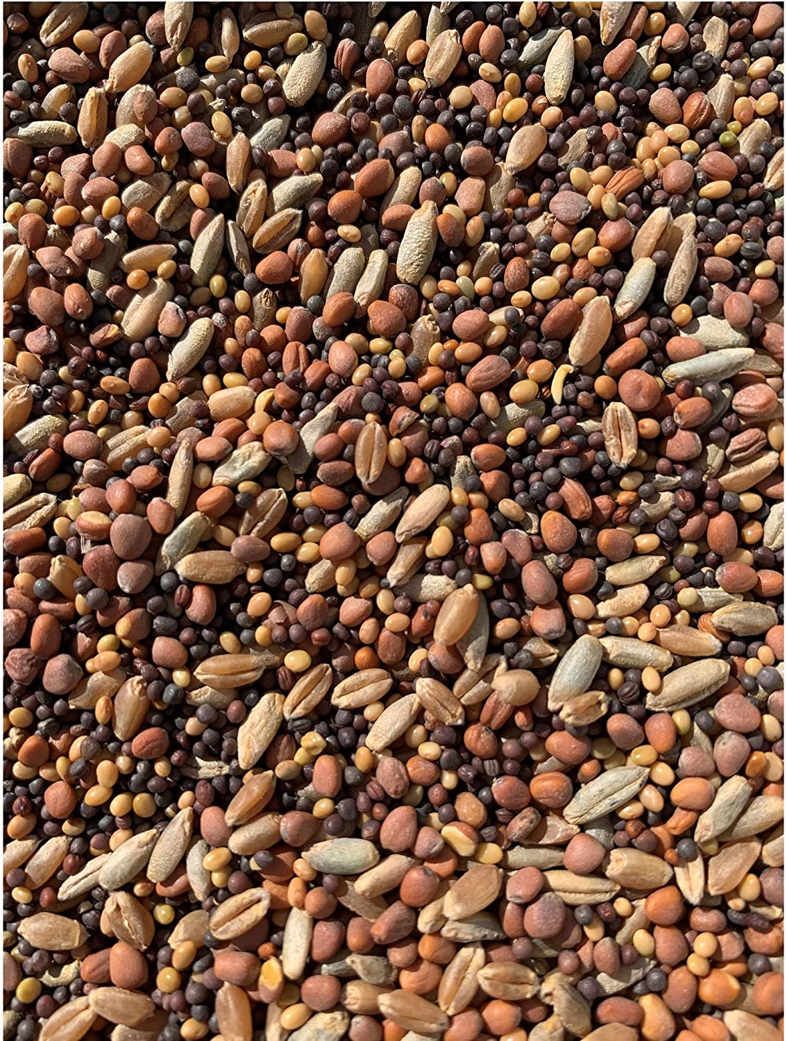 25lb Whitetail Deer Food Plot Seed | Turnip Radish Clover Wheat Rye Mix | Branson's Buffalo Blend