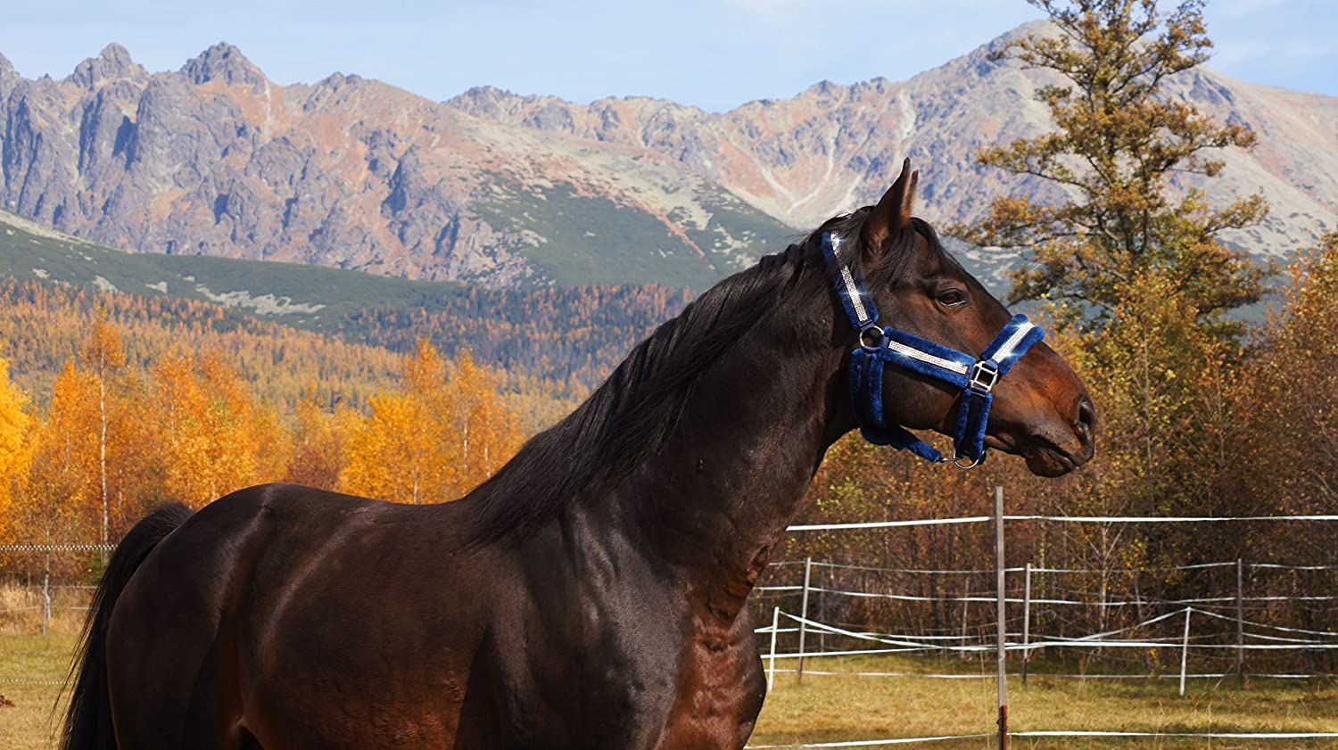 Transport-Halfter Rittmeister Comfort Halfter Nobility Stall-Halfter Pferde-Halfter Cob Full Pony