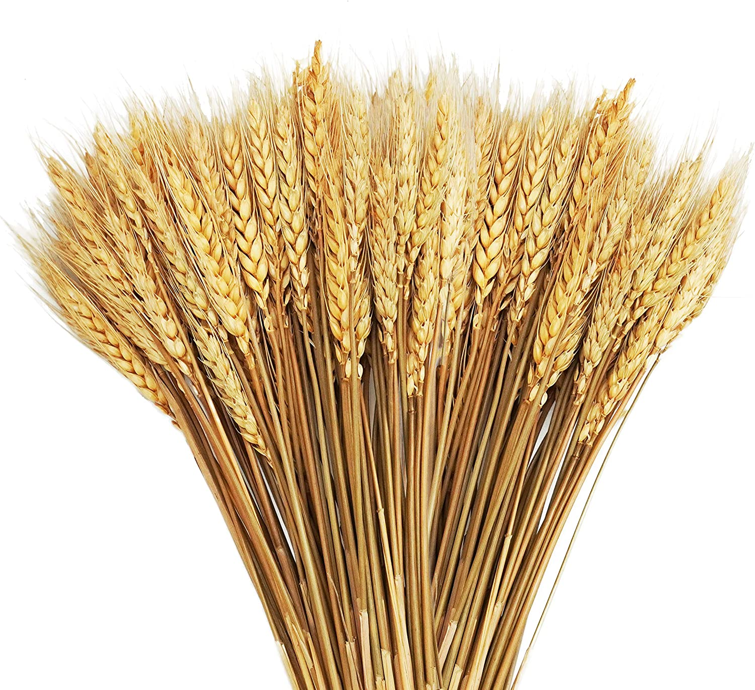 20.5 Inches Dried Wheat Stalks, Uieke 100 Stems Dried Flowers 100% Natural Wheat for Home Décor Kitchen Wedding Table Centerpiece Farmhouse Vase DIY Decoration
