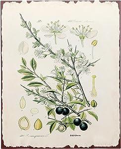 "Barnyard Designs Botanical Olive Tree Print Wall Art Metal Tin Sign Primitive Country Farmhouse Home Decor 13"" x 10"""
