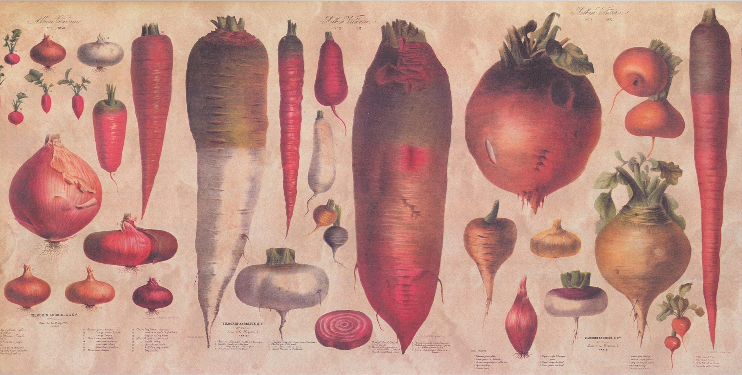 Wallpaper Border - Vegetables Wallpaper Border 30494 CB