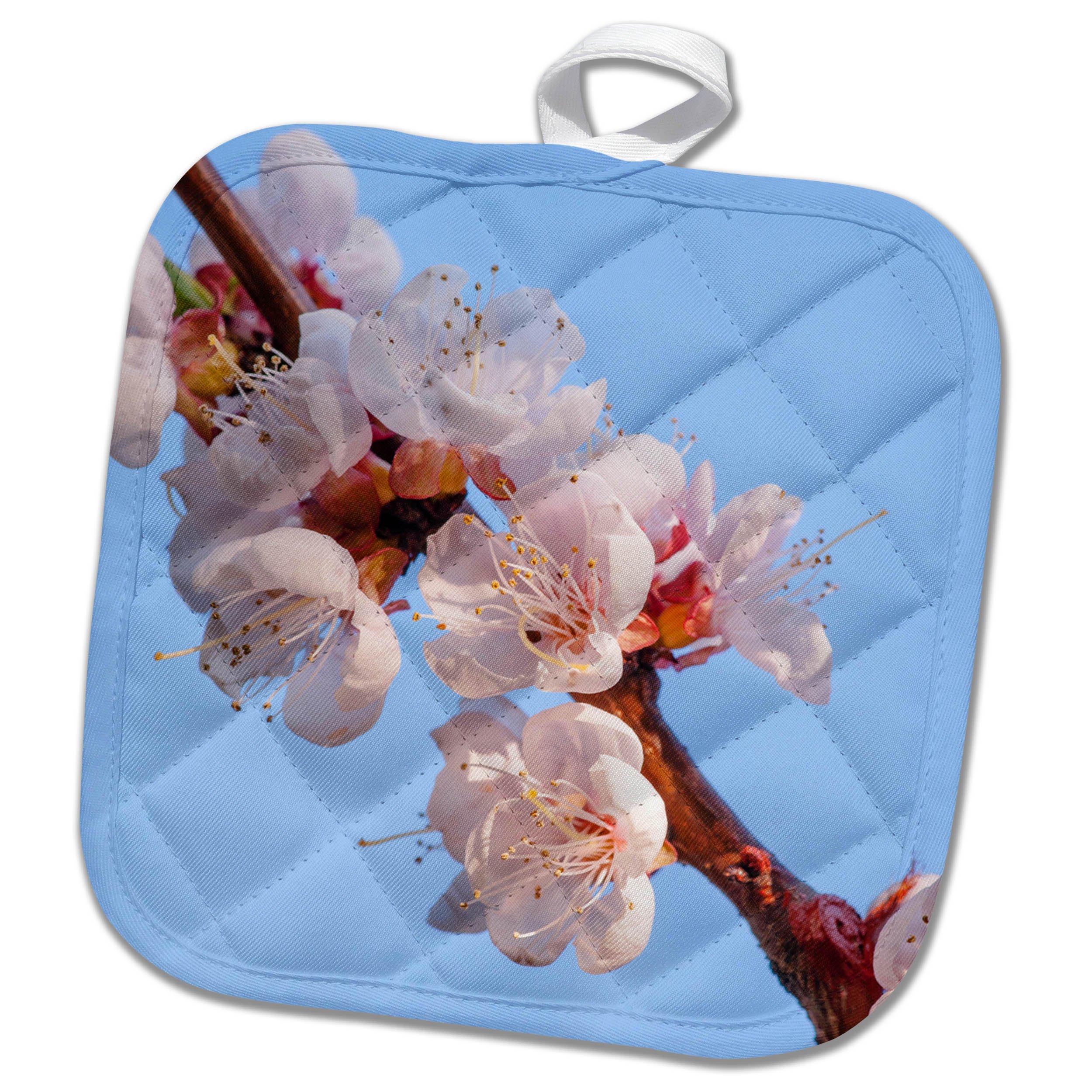 3dRose Alexis Photography - Flowers Sakura 2 - Diagonal of apricot flowers, pale blue sky - 8x8 Potholder (phl_272476_1)