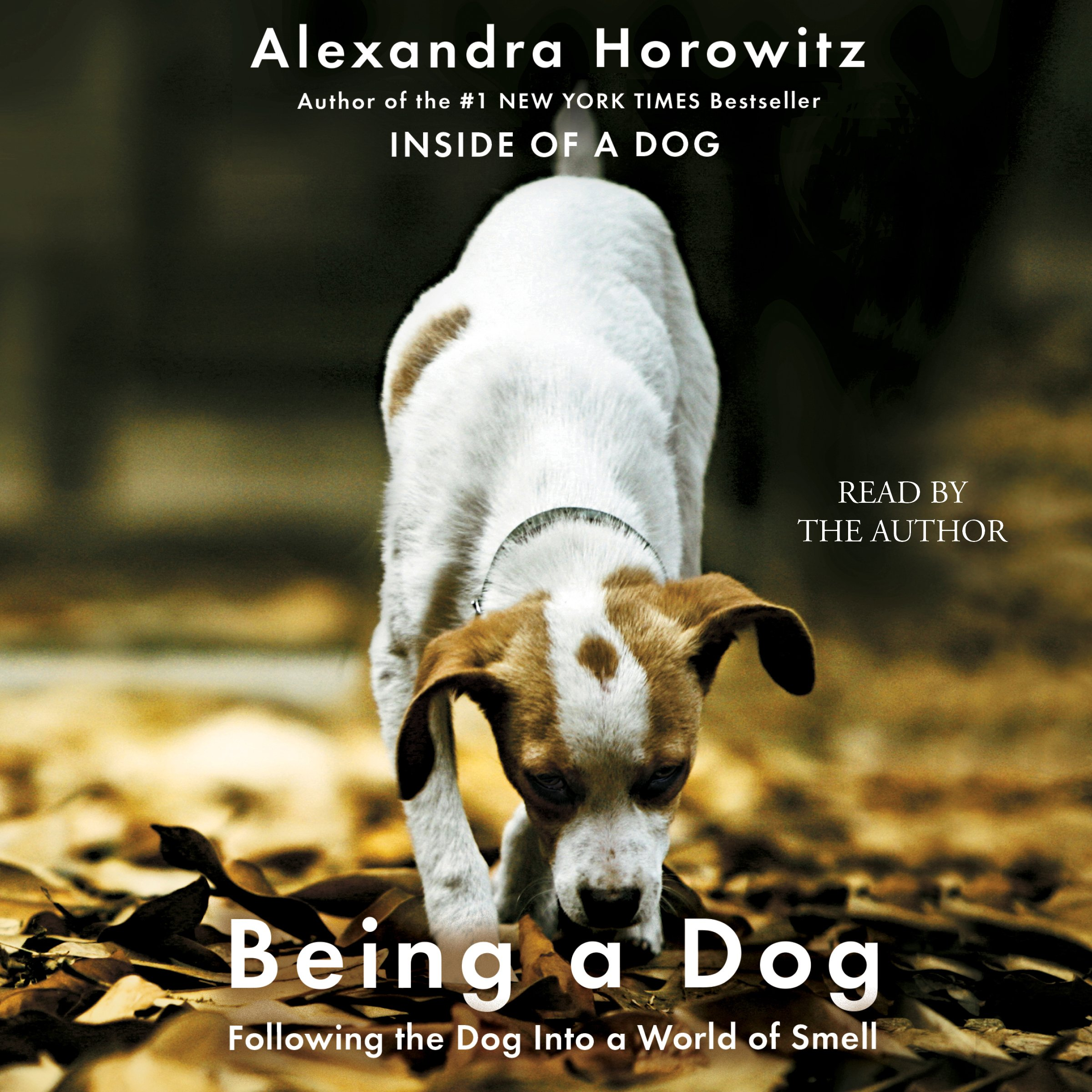 Being a Dog by Unknown (Image #1)