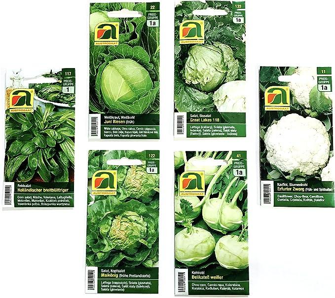 12 variedades | Surtido de semillas de verduras | más de 14000 ...