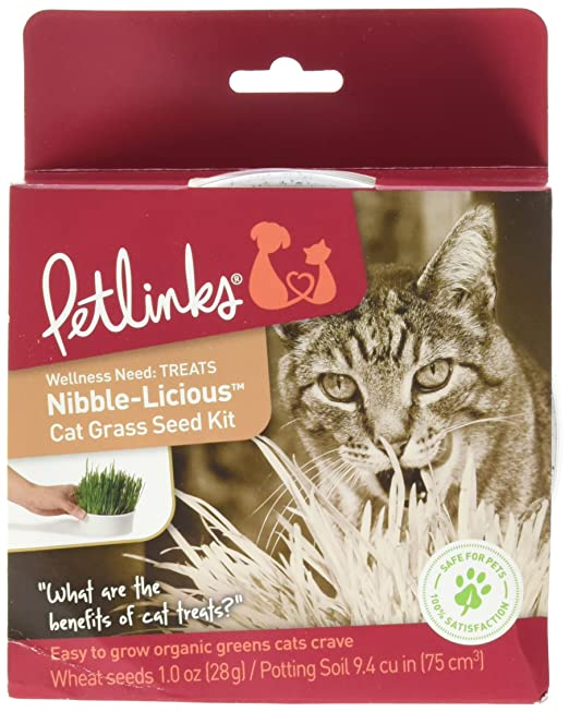 Amazon.com: Petlinks Nibble-Licious Cat Grass, Kit, 1 ...