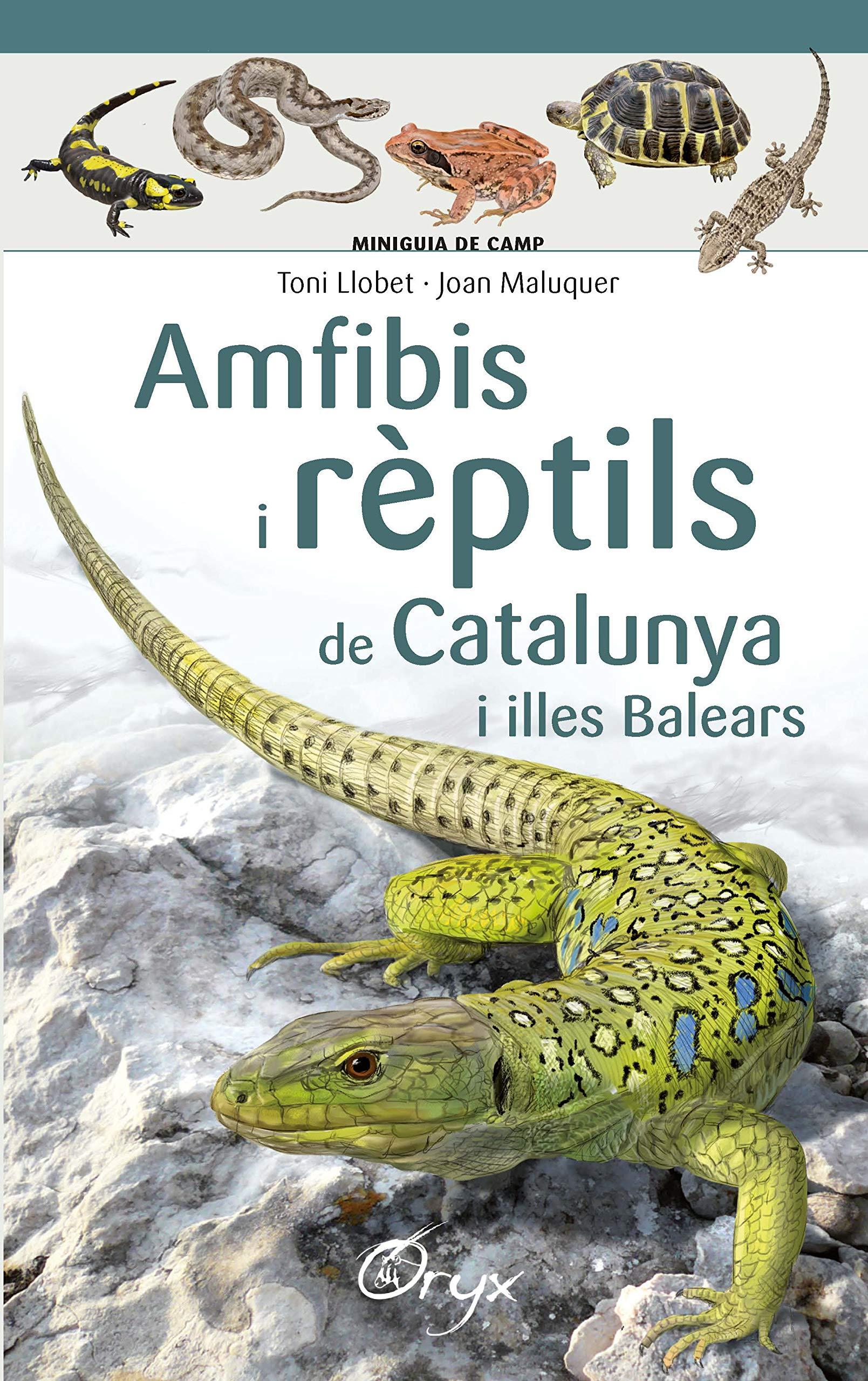 Amfibis I Rèptils De Catalunya I Illes Balears (Miniguia de camp)