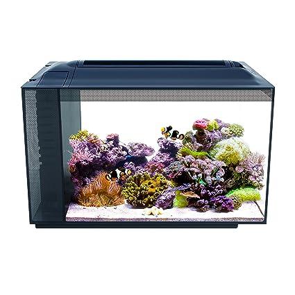 amazon com fluval 10531a1 sea evo xii aquarium kit 13 5 gal pet