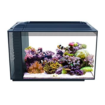 amazon com fluval 10531a1 sea evo xii aquarium kit 13 5 gal pet