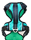 Black Rhino - The Comfort Dog Harness with Mesh