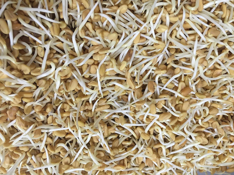 Semillas orgánicas para germinados de fenogreco - Semillas ...