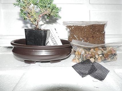 Amazon Com Jm Bamboo Bonsai Potting Kit 6 25 Bonsai Pot Included 6 Inches Tall Bomsai Tree Garden Outdoor