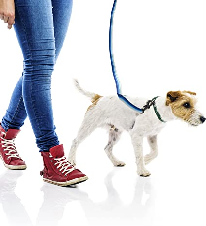 """DOG LEASH FOR SMALL DOG PUPPY PET LEAD BLUE 48/"""" LONG X 1/"""" WIDE @@ MY OTHER ITEMS"""