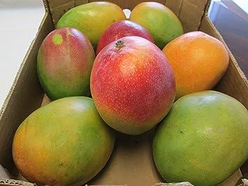 8 Selected Sweet and Juicy Fresh Large Mango Fruit - 9 Lb Pounds ...