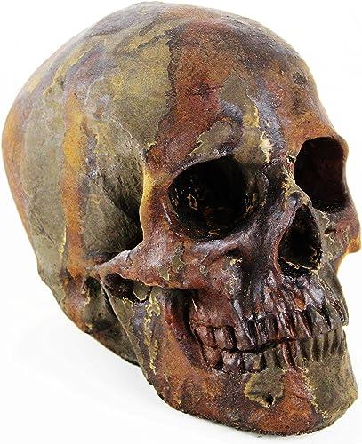 Skull Head Home and Garden Statues Cement Figurine Cast Stone Skull Skeleton Halloween Statuary