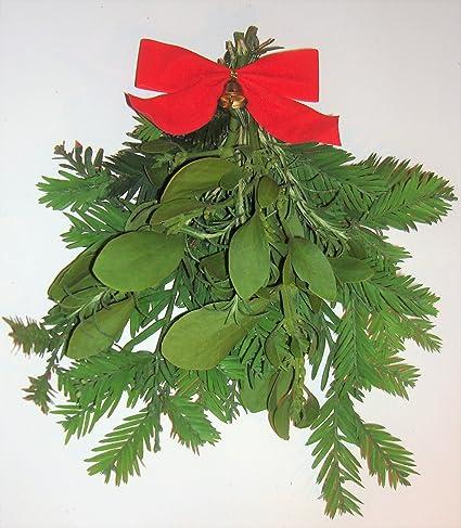 Amazon Com Fresh Large Real Mistletoe Christmas Holiday Kissing